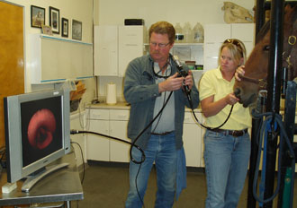 In this picture, Dr. Crawford holds the endoscope in the horse's nasal passage, while Dr. Martin directs the flexible end toward the horse's larynx. Disease affecting the horse's voice box or larynx is a common cause of respiratory noise production during exercise and causes exercise intolerance in athletic horses.