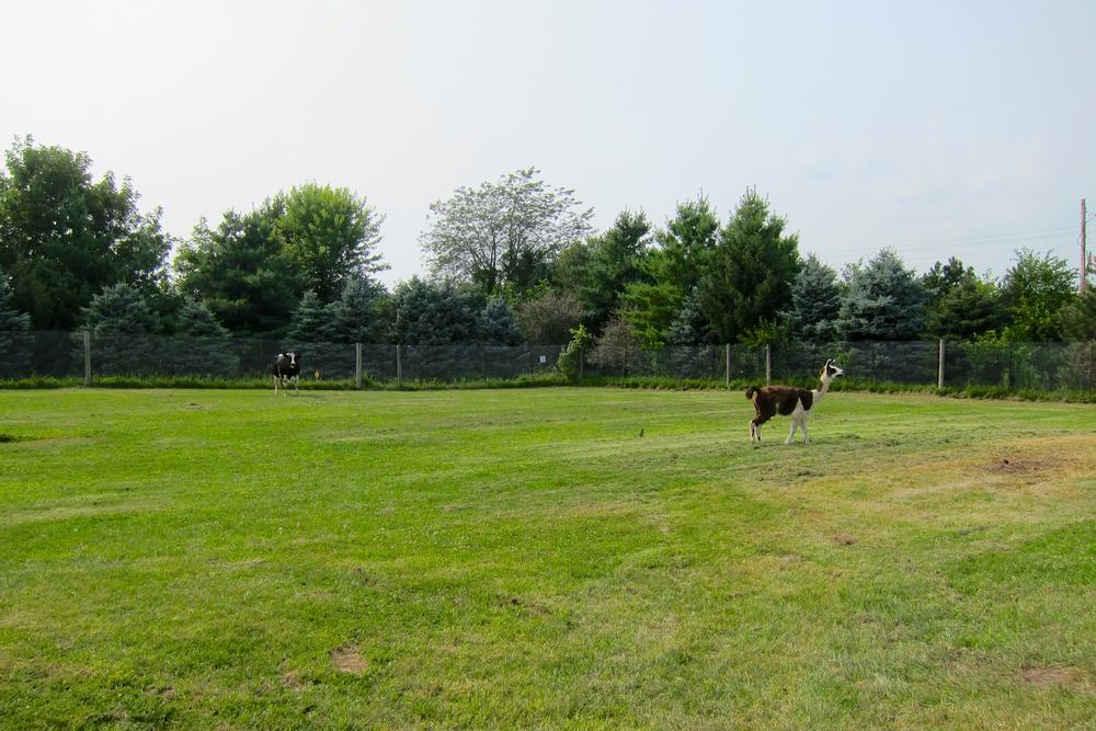 Alpaca Pasturess.jpg