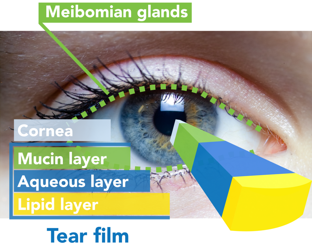 Tear Film Graphic 5000.png