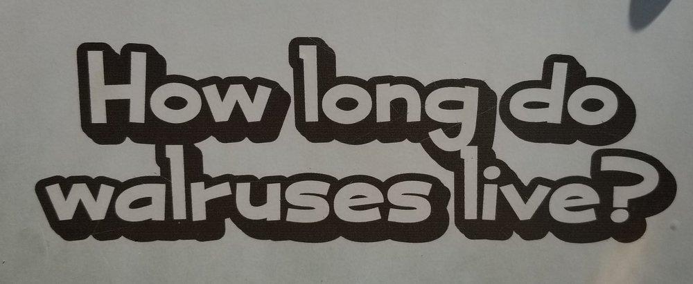 walrus sign1.jpg