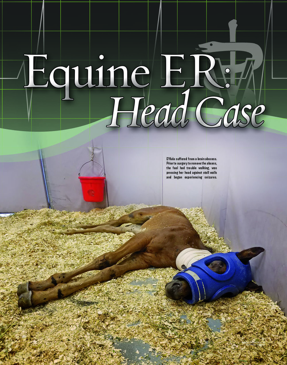G18 Equine ER_Page_1.jpg