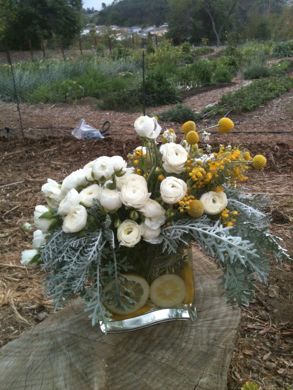 A flower arrangement I made from Silver Lake Farms, an urban flower farm with a kindred devotion to sustainability.
