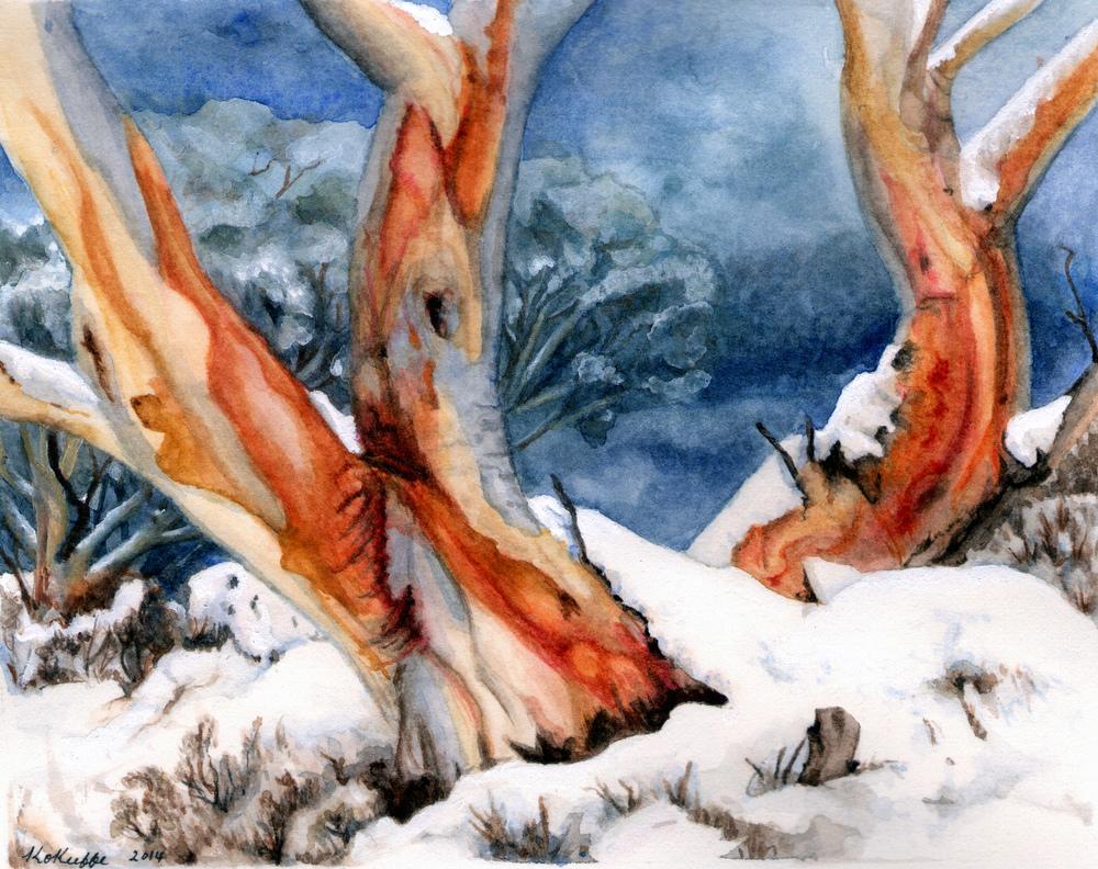 Snowgums (SOLD)