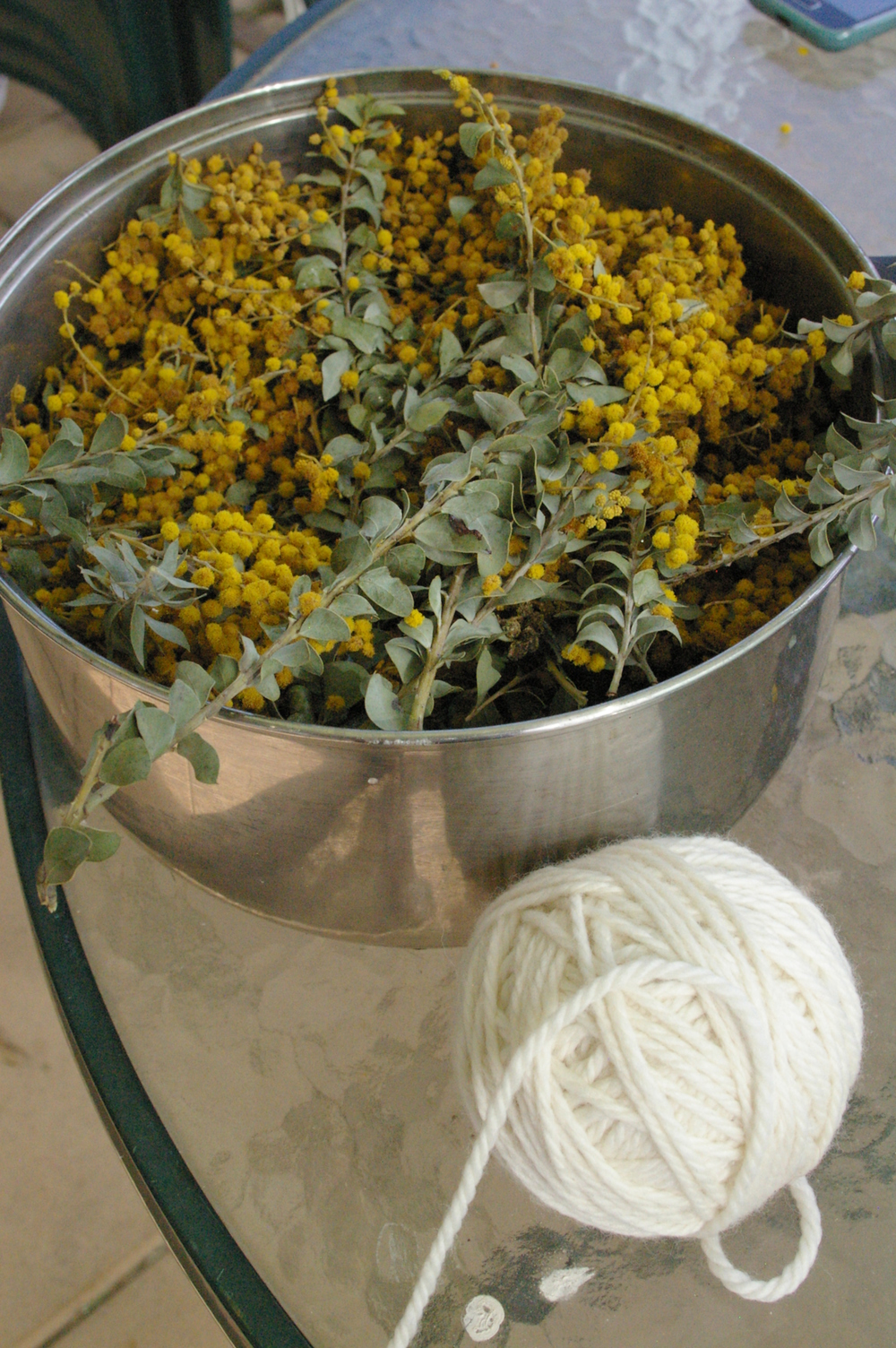 Wattle and white wool