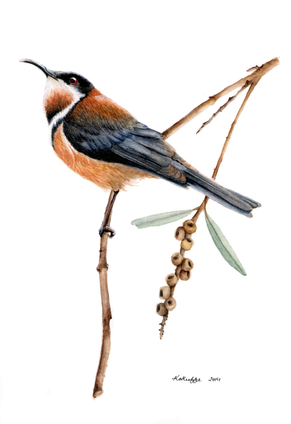 Eastern Spinebill (SOLD)