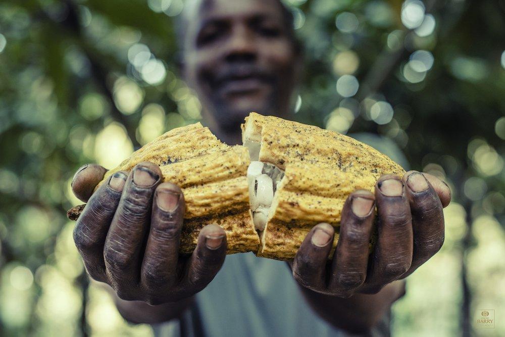 Plantation - Tanzania - man opening a cocoa pod.jpg