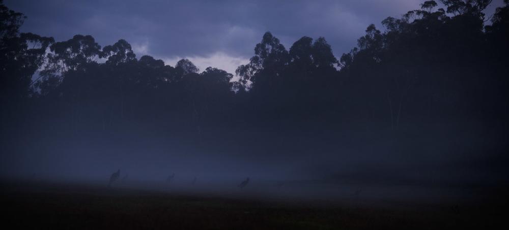 landscape photography Kangaroos dusk fog
