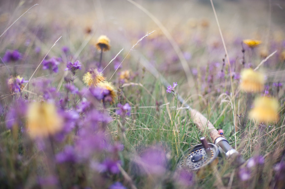 fly fish fishing rod reel flowers field bokeh