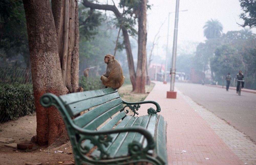 agra monkey bench india taj mahal