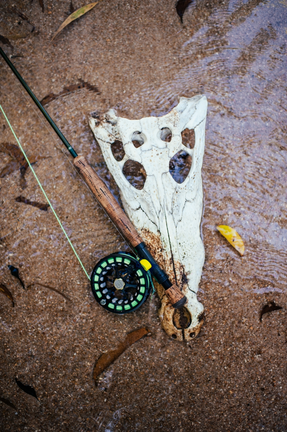 Dangers of Fly Fishing Crocodile Skull