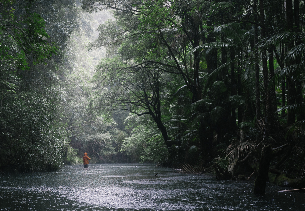 Lone figure fishing in the rain and jungle