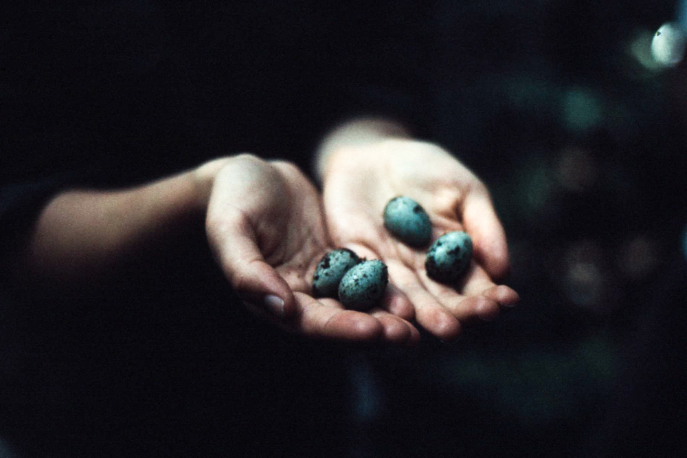 Holding bird eggs in hanads