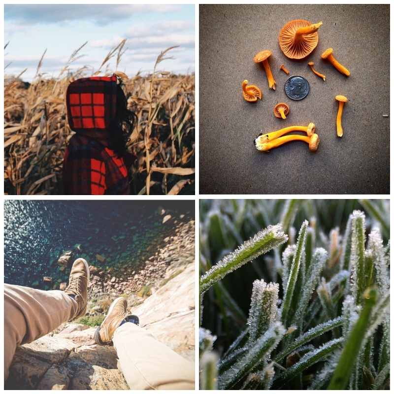This week's Instacrushes! Clockwise from top left: @chris_praetzel, @alanbergo, @dahlidurley, @bodhiximagery