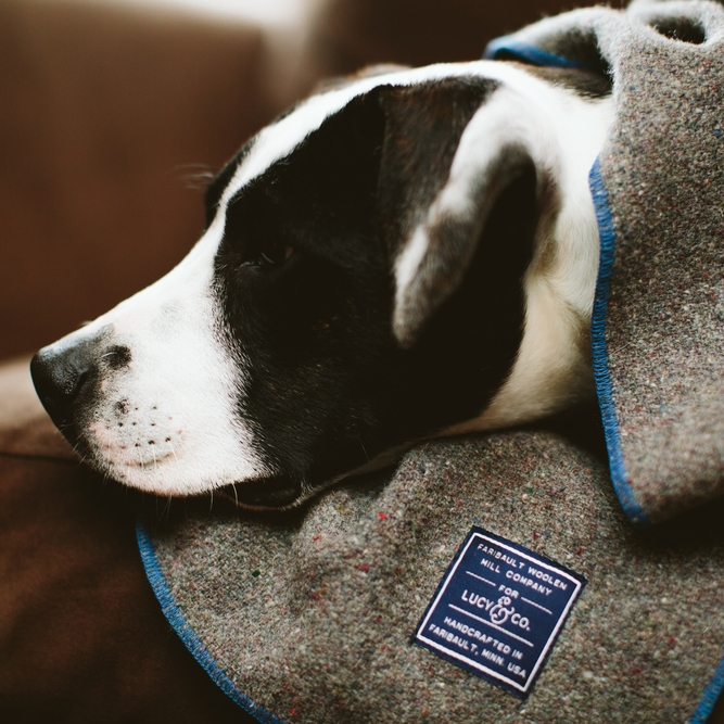 Faribault Woolen Mills Dog Blanket - The Midwestival Gift Guide 2014