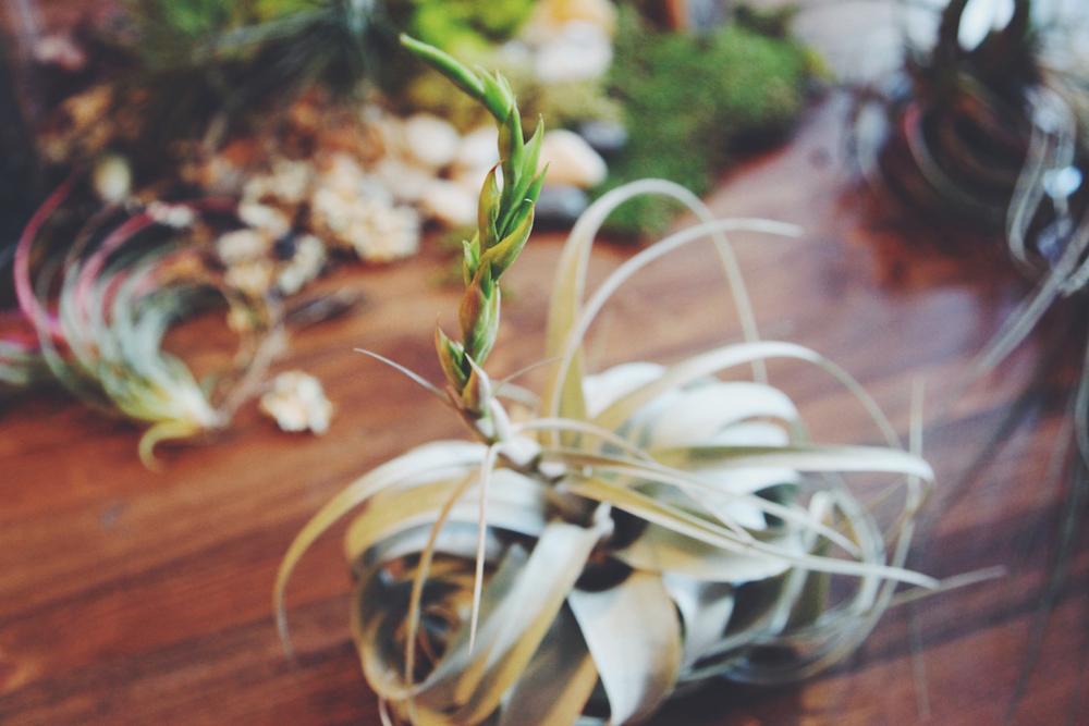 Flora_004.jpeg