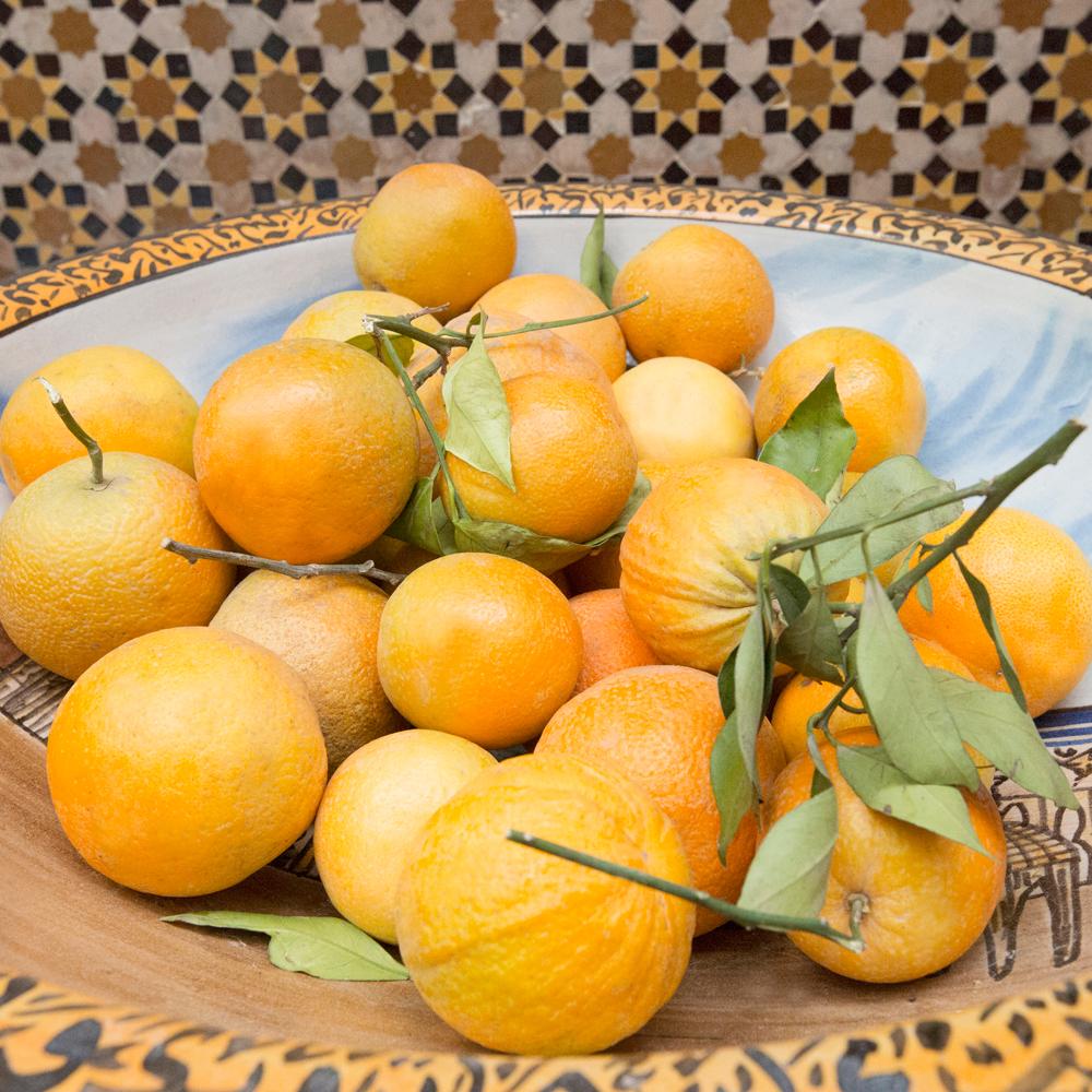 JulieHolder_Marrakech_15.jpg