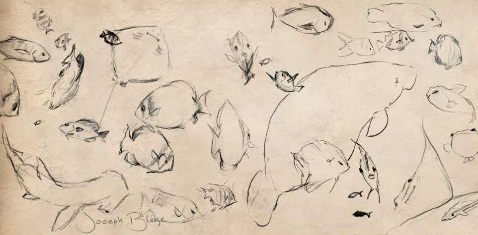 Joseph Blake's sketches of fish