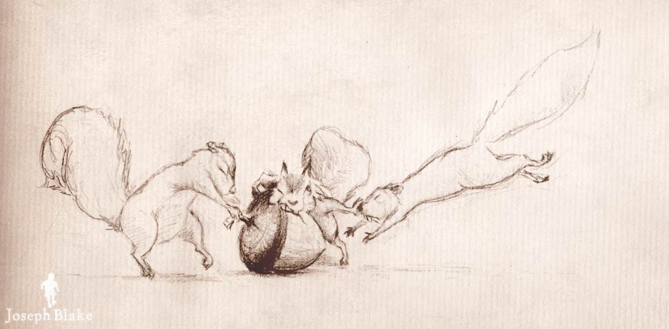 Squirrel sketches by Joseph Blake