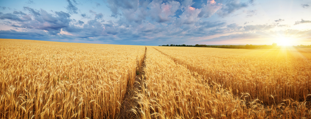 Perpetuate Advisory Specialists in Agriculture Business Management & Consultancy