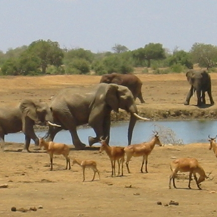 Tsavo National Park - Watering hole