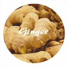ginger_1.jpg