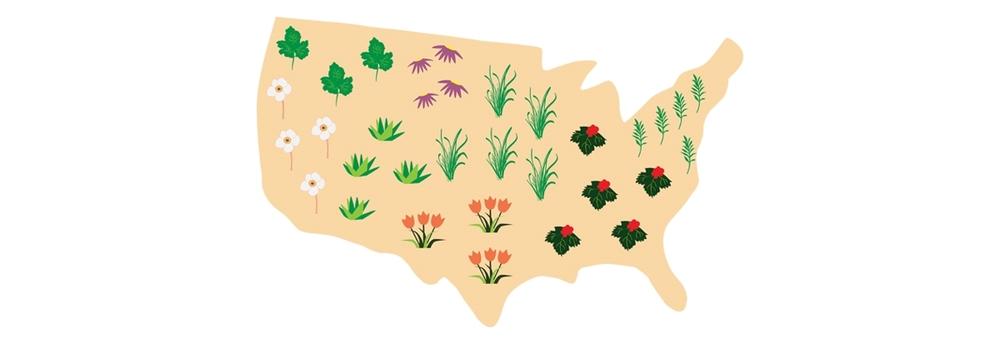 United Herbs