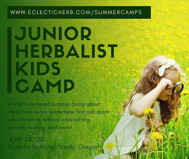 Have you and your kids looked into summer camps yet? If they are between the ages of 8-12 and like being in nature and making things with plants, we think they would be a great fit in our 4th annual Junior Herbalist Kids Camp! This all-outdoors camp takes place on our organic farmland in the beautiful Oregon countryside. Kids have an opportunity to harvest fresh herbs and process them into fun and tasty herbal products! All activities and games are designed to encourage a sense of autonomy, curiosity, and respect for the natural world. We are currently offering early bird discounts at 15% off. Registration can be found at www.eclecticherb.com/summercamps, or via the link in our bio!