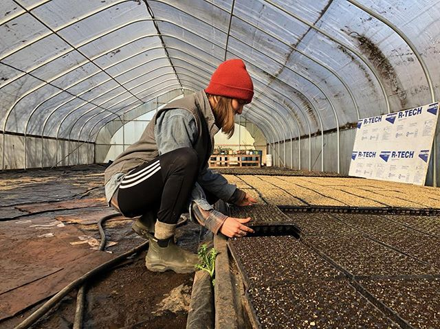 Spring is here, and greenhouse planting is in full swing! 🌱