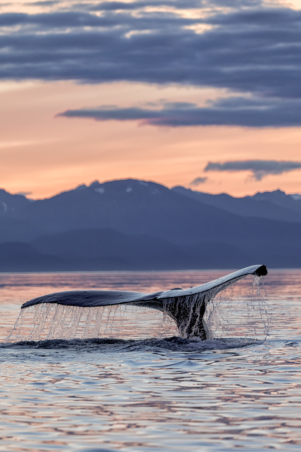 Humpback-Fluke-Flame-Sunset-0145.jpg