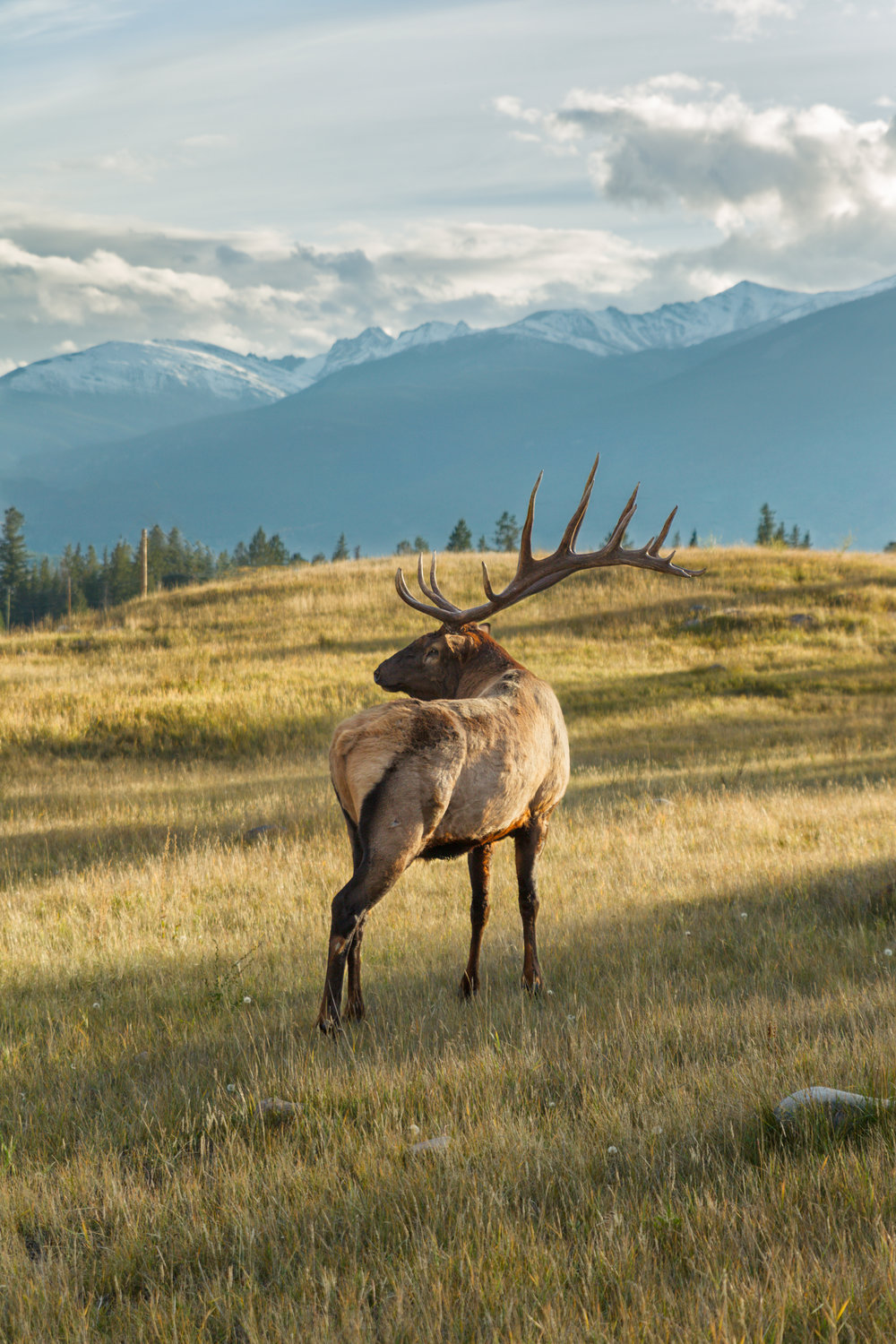 16-Point-Elk-Mountains.jpg