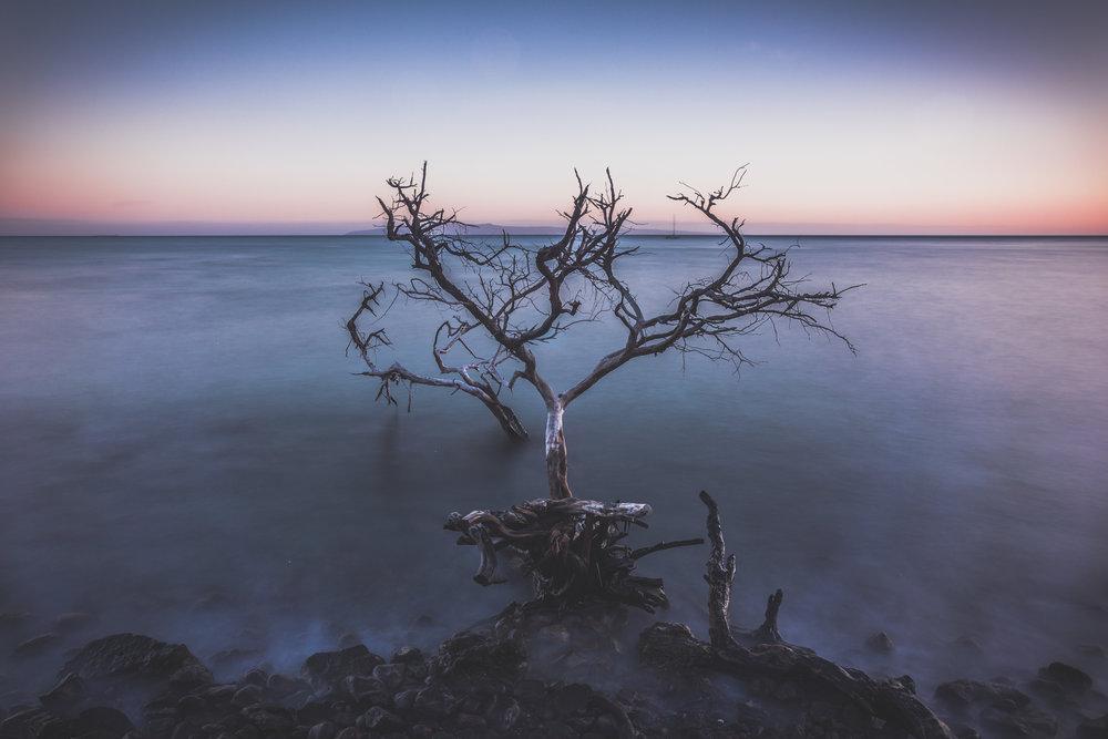 Olowalu Driftwood-2.jpg