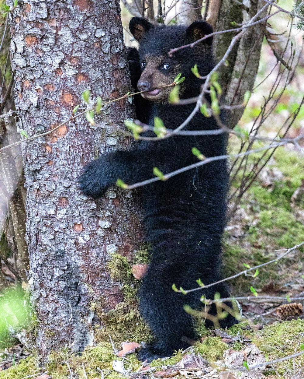 Black-Bear-2061-insta.jpg
