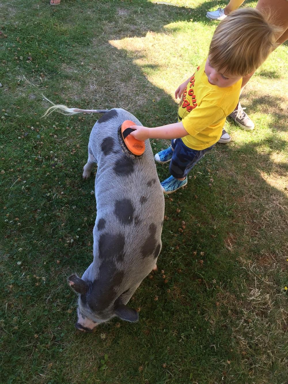 A pig named Hamlet