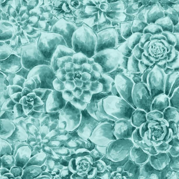 Succulent in Teal