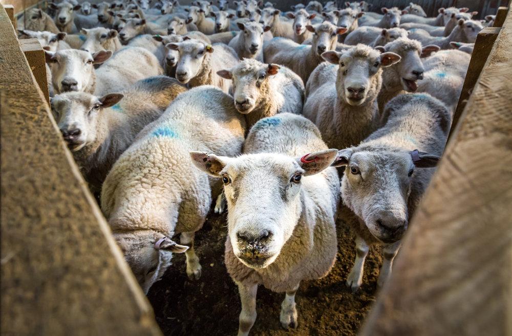 Ewe looking at me?!
