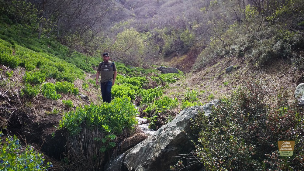 Beus Trail
