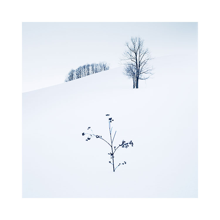 Copse, Tree & Fern, Hokkaido, 2018. Image © Bruce Percy.