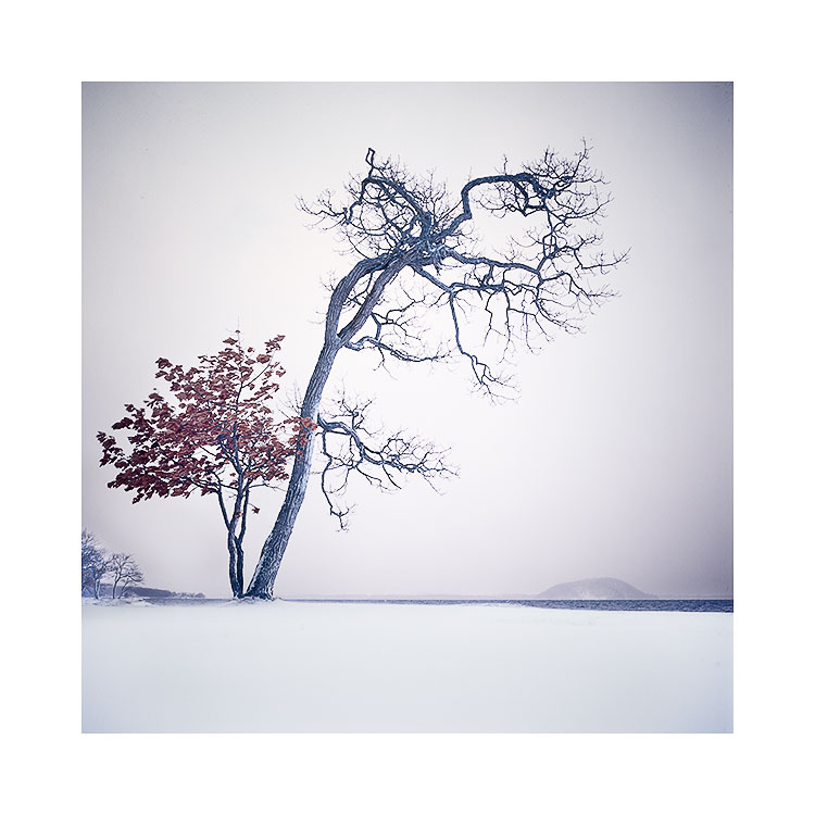 Getting to know a tree, Hokkaido 2018
