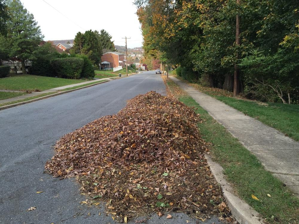 leave pile 2.jpg