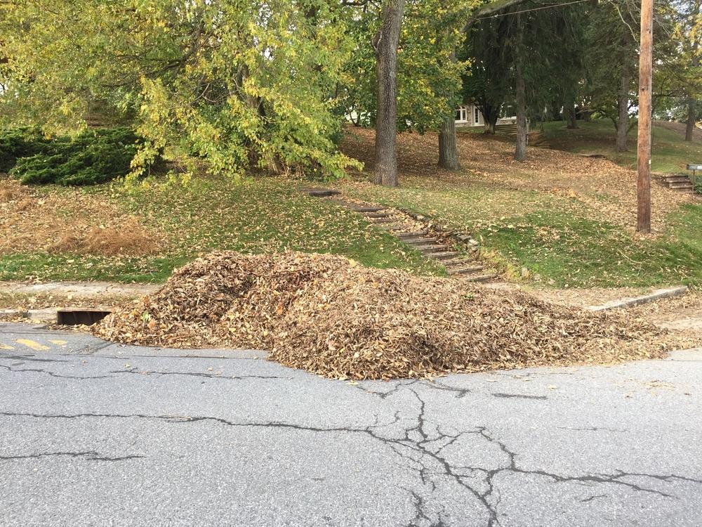 leave pile 5.jpg