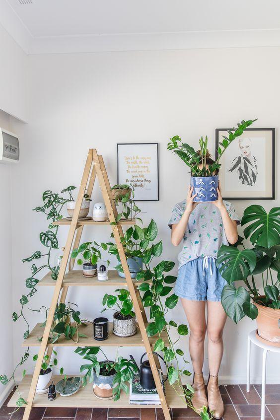 house plant.jpg