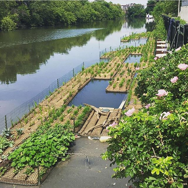 Then and Now! What a difference one year can make. Come celebrate a year of floating gardens tomorrow at the #UrbanRiversKayakParade 🌿🌿LINK IN BIO🌿🌿