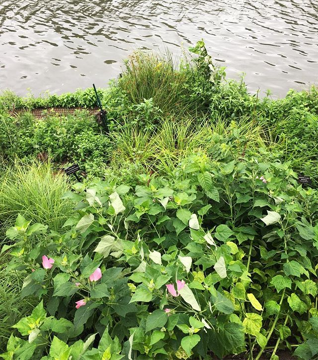 Best medicine for gloomy day blues? The Urban Rivers lush greenery!  #urbanrivers #green #plants #rainydays #chicago #chicagoriver