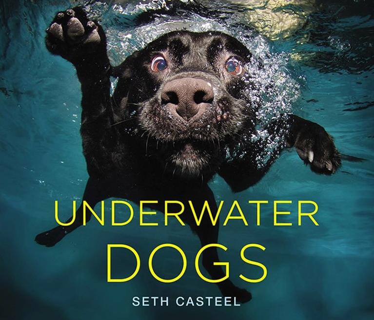 dog underwater.jpg