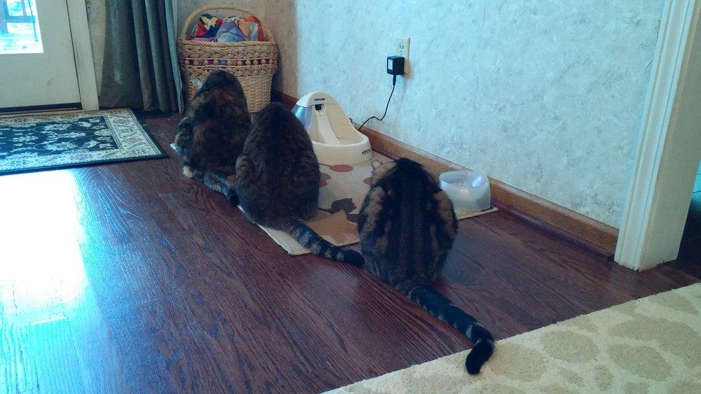Cat Farm.jpg