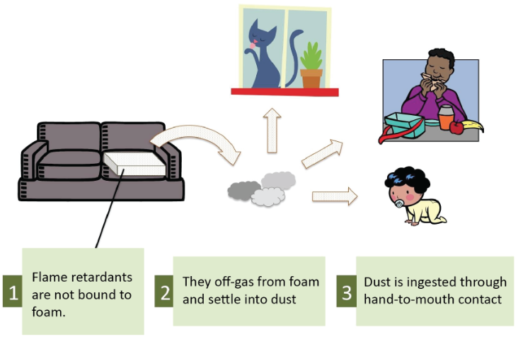 Exposure to flame retardants inside and outside the home are via inhalation and ingestion.