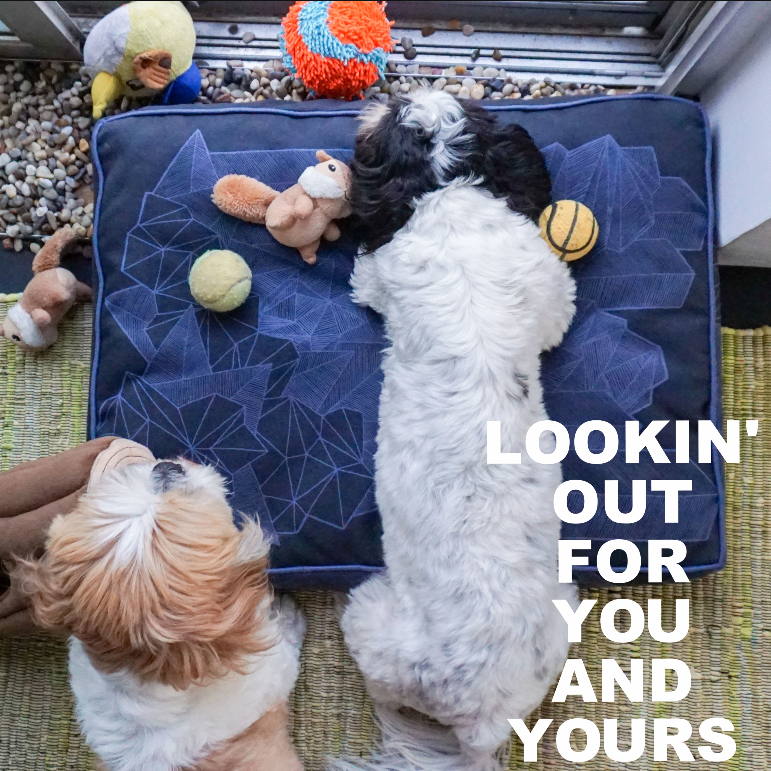 Click above to make your pooch's life a little more comfy with a Latex and Cotton Dog Bed…
