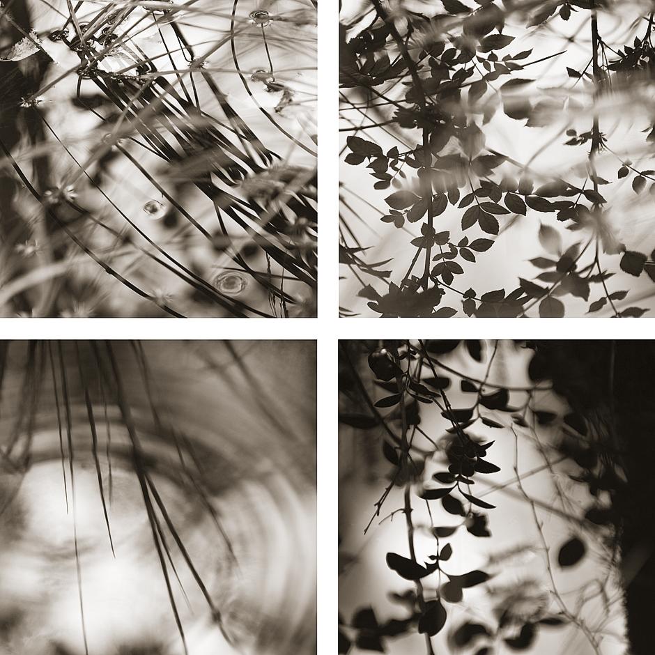 © Iain Sarjeant