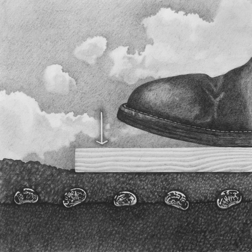 """aid to germination"", graphite, 2013, 8"" h x 8""w"