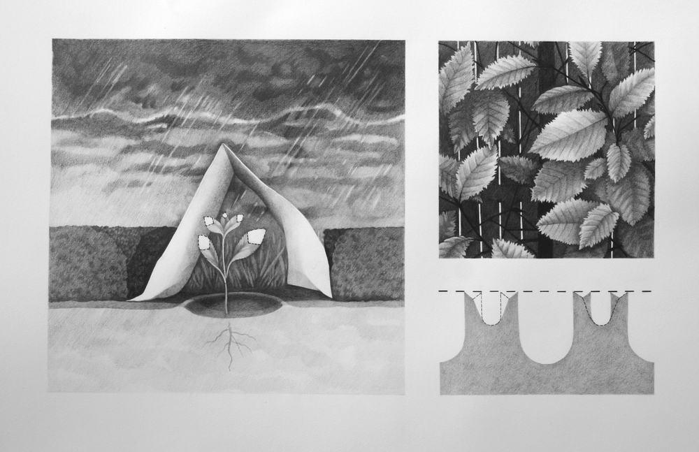 """transplant, hedge, cut, cleanse"", graphite, 2013, 12 7/8"" h x 22 1/8"" w"
